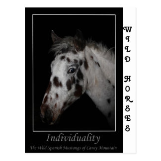 """Individuality"" - Wild Spanish Mustangs Postcard"