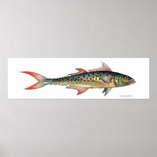 Indo-Pacific King Mackerel Fish Poster