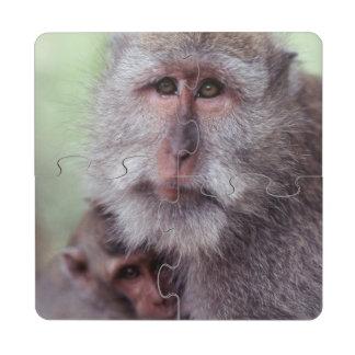 Indonesia, Bali, Ubud, Long-tailed Macaque 1 Puzzle Coaster
