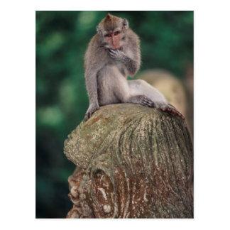 Indonesia, Bali, Ubud, Long-tailed Macaque 2 Postcard