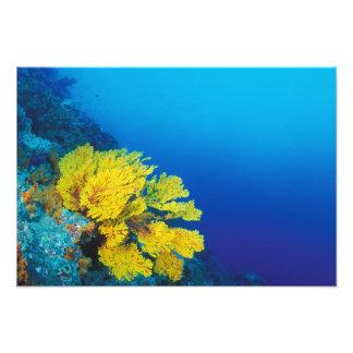 Indonesia, Banda Islands, prolific coral reefs Photo Art