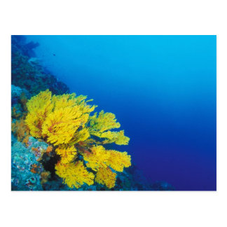 Indonesia, Banda Islands, prolific coral reefs Postcard