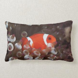 Indonesia, Komodo Island, View of Spinecheek Lumbar Pillow