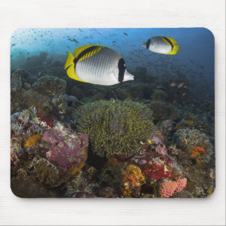 Indonesia, Komodo National Park. Lined Mouse Pad