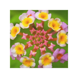 Indonesian Flower Canvas Print