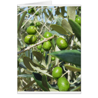 Infested olive tree by olive fruit fly card