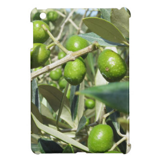 Infested olive tree by olive fruit fly case for the iPad mini