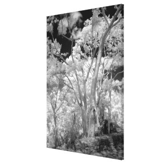 Infra red of trees buildings and trails in Las 2 Canvas Print