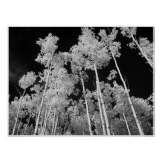 Infrared Poplar Tree Forest Poster