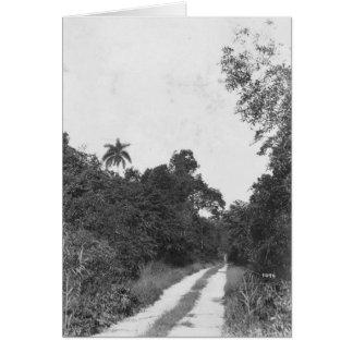 Ingraham Highway, Florida Everglades, 1922 Greeting Card