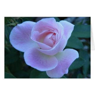 Innocent blush card