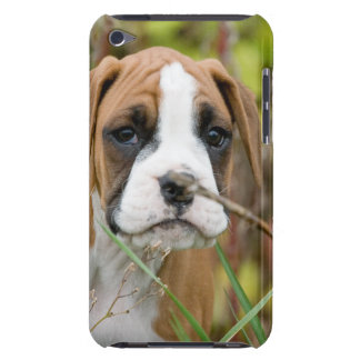 Innocent Boxer Puppy Dog Outdoors Ipod Touch Case