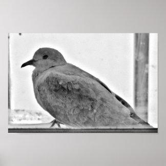 Innocent Dove Poster