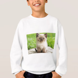 Innocent Ragdoll Kitten Sweatshirt