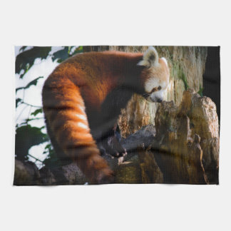 inquisitive red panda kitchen towel