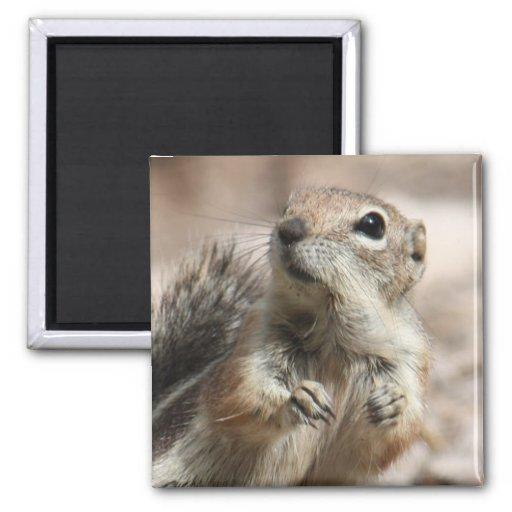 Inquisitive Squirrel Magnet