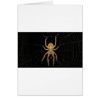 Insect Macro Spider Colombia Card