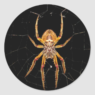 insect macro spider colombia classic round sticker