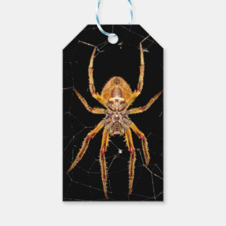 insect macro spider colombia gift tags