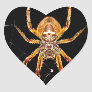 insect macro spider colombia heart sticker