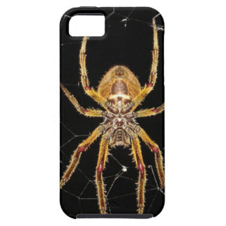 Insect Macro Spider Colombia iPhone 5 Cover