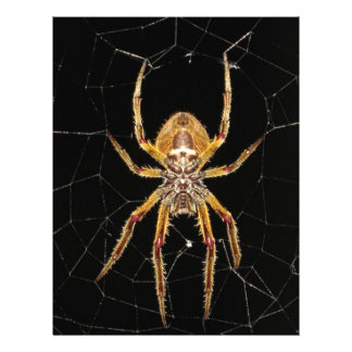 Insect Macro Spider Colombia Letterhead