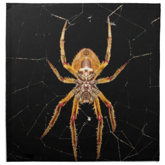 insect macro spider colombia napkin