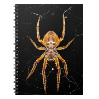 insect macro spider colombia notebook