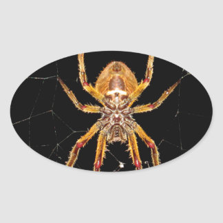 insect macro spider colombia oval sticker