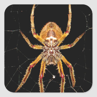 insect macro spider colombia square sticker