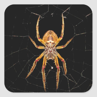 insect macro spider colombia square sticker