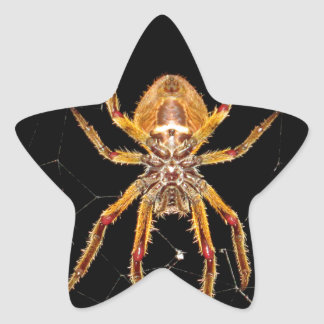 insect macro spider colombia star sticker