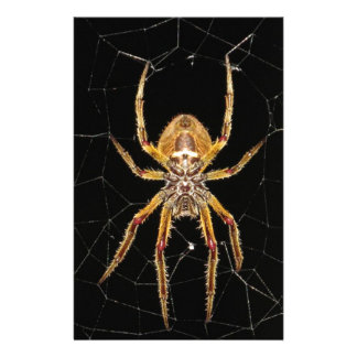 Insect Macro Spider Colombia Stationery