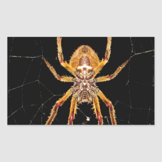 insect macro spider colombia sticker