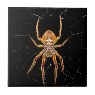 insect macro spider colombia tile