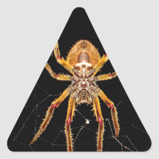insect macro spider colombia triangle sticker