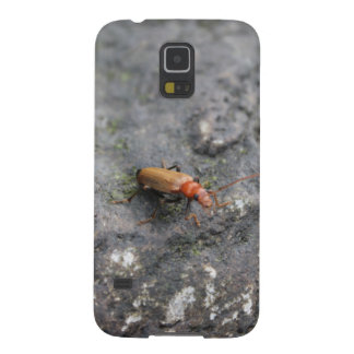 Insect on a rock. galaxy s5 covers
