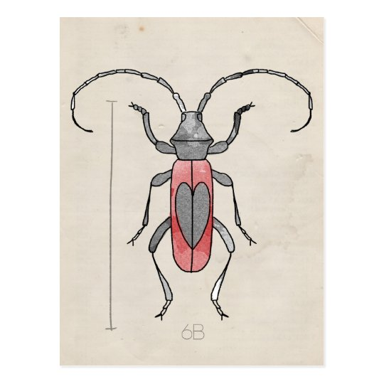 Insect Series | Red Beetle Postcard