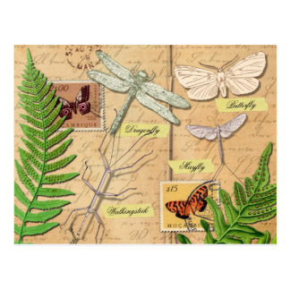 Insects and the common polypody fern postcard