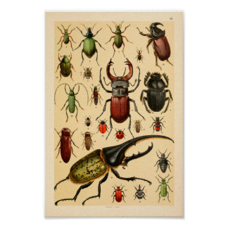 Insects Beetles Collection Art Print