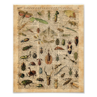 Insects Bugs Vintage Illustration Dictionary Art Photo Print