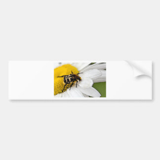 Insects Bumper Sticker