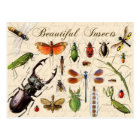 Insects - earth's most diverse organisms postcard