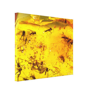 Insects inside amber canvas print