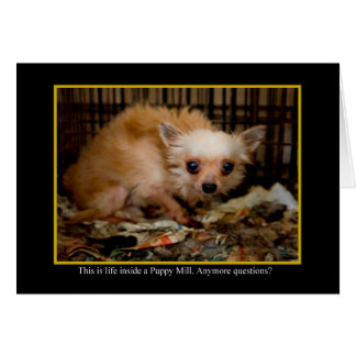 Inside A Puppy Mill Animal Notecards Card