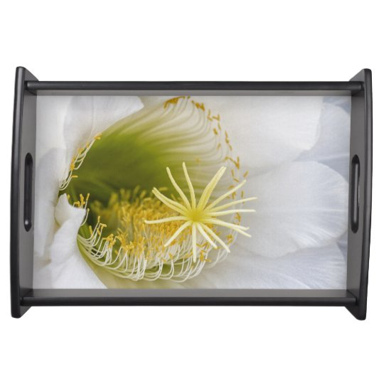 Inside of an Echinopsis in bloom Serving Tray