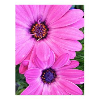Inside of Pink Purple Gerbera Daisy Flower Nature Postcard