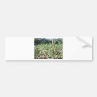 Inside, the lush green grass sprouts everywhere bumper sticker