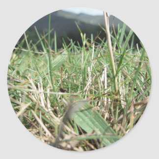 Inside, the lush green grass sprouts everywhere classic round sticker