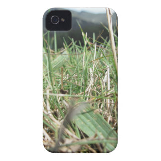 Inside, the lush green grass sprouts everywhere iPhone 4 Case-Mate case